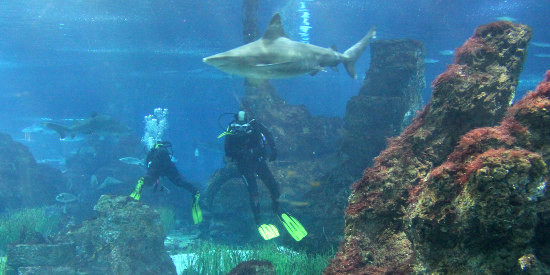 Sharks in the Aquarium of Barcelona